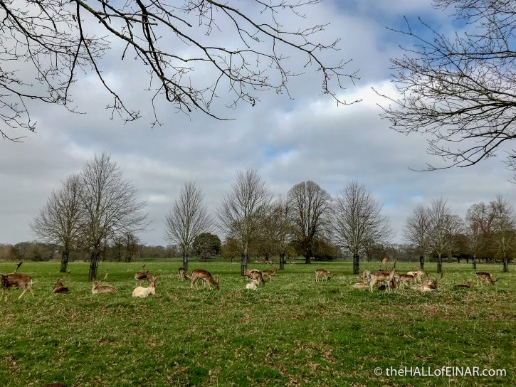 Charlecote Park Deer - The Hall of Einar - photograph (c) David Bailey (not the)