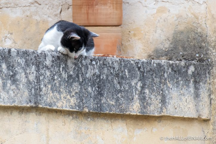 Feral Cat, Matera - The Hall of Einar - photograph (c) David Bailey (not the)