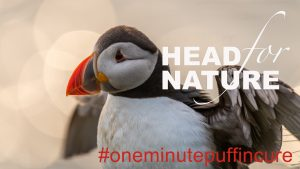 The One Minute Puffin Cure