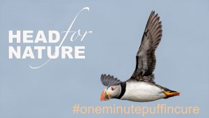One Minute Puffin Cure #7