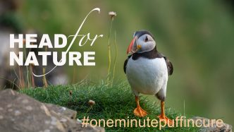 One Minute Puffin Cure #8