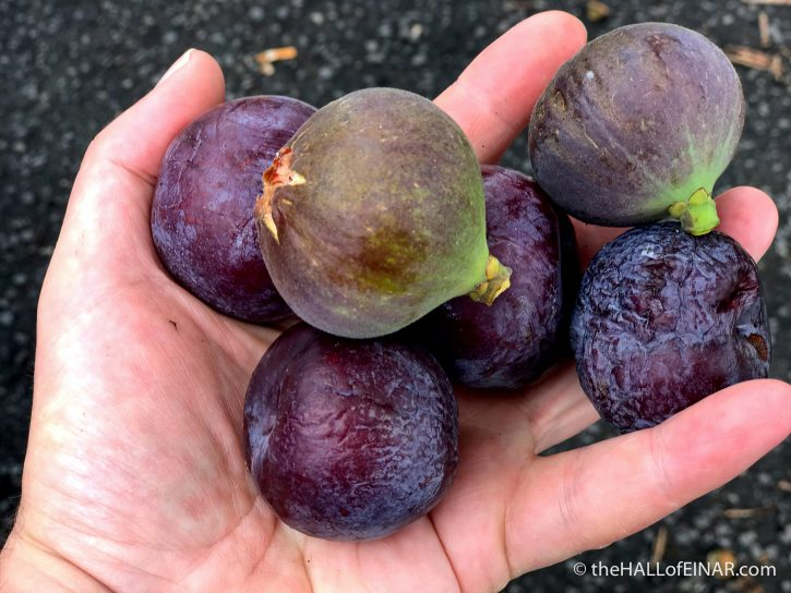 Roadside figs - Gran Canaria - The Hall of Einar - photograph (c) David Bailey (not the)