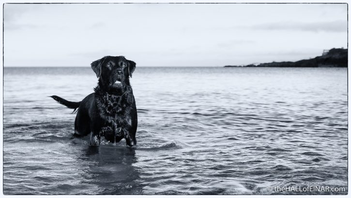 Dog in the water - Brixham - The Hall of Einar - photograph (c) David Bailey (not the)