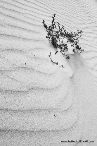 Ripples in the sands