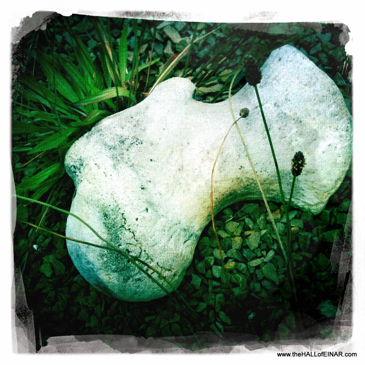 Driftwood and whalebone