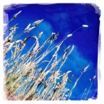 Sunshine and grass