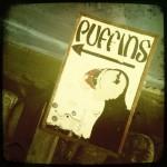 Puffins!
