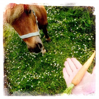 Lady the Shetland Pony