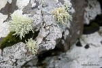 The Trouble With Lichen