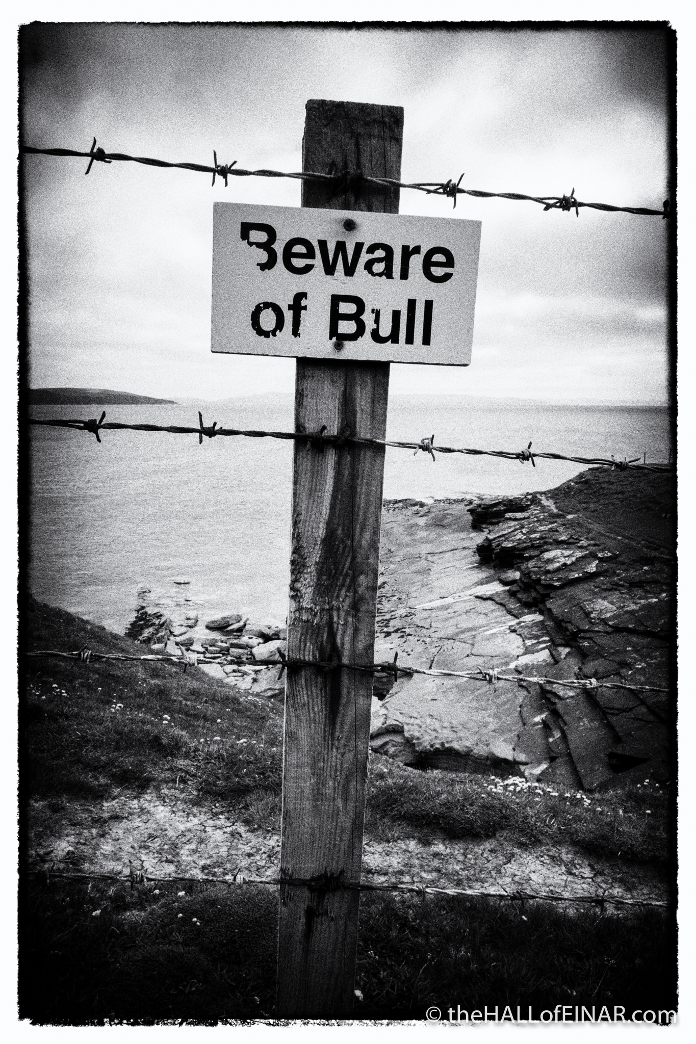 Beware of Bull - photograph (c) 2016 David Bailey (not the)