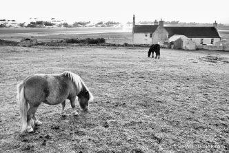 Happy horses grazing - photograph (c) 2016 David Bailey (not the)