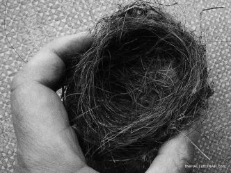 Birds' nests look so simple - photograph (c) 2016 David Bailey (not the)