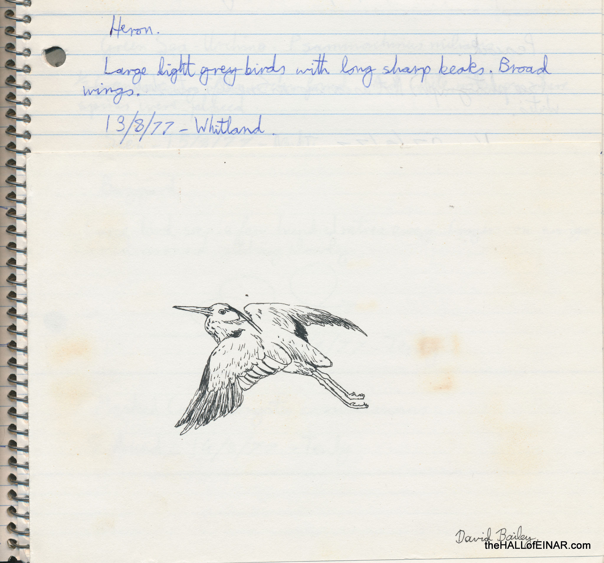 Heron - 1970s Nature Notebooks - The Hall of Einar