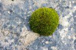 Moss - photograph (c) David Bailey (not the)