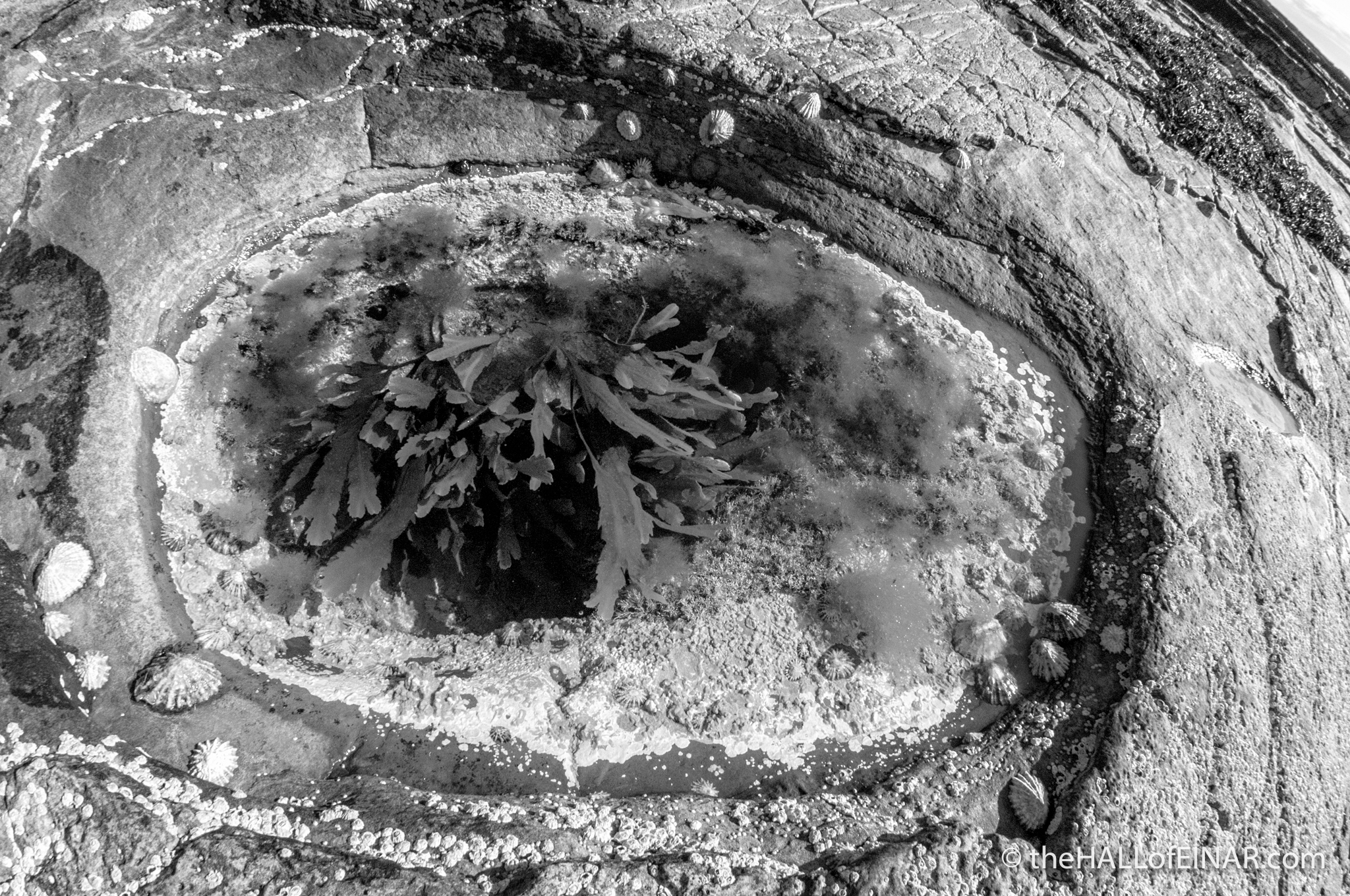 Lost in a rock pool - The Hall of Einar - photograph (c) David Bailey (not the)
