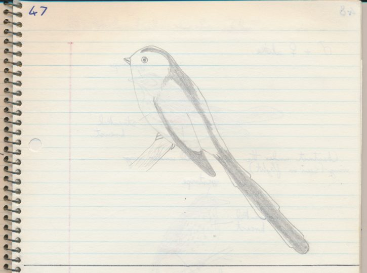 Long Tailed Tit - The Hall of Einar - photograph (c) David Bailey (not the)