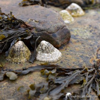 The Limpet twins - The Hall of Einar - photograph (c) David Bailey (not the)