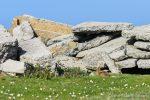 Run, rabbit, run - The Hall of Einar - photograph (c) David Bailey (not the)