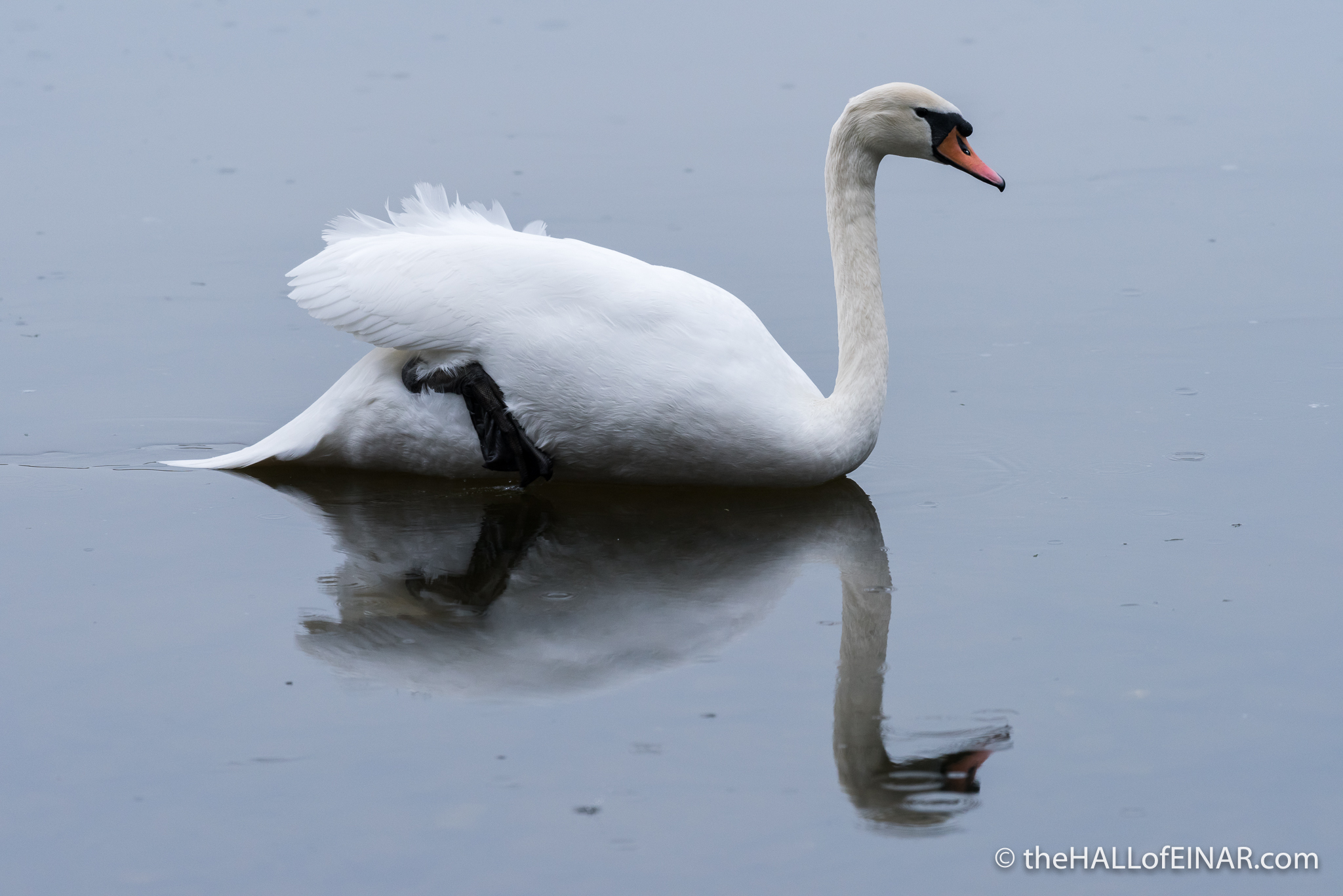 Swan Lake on Ice - The Hall of Einar - photograph (c) David Bailey (not the)