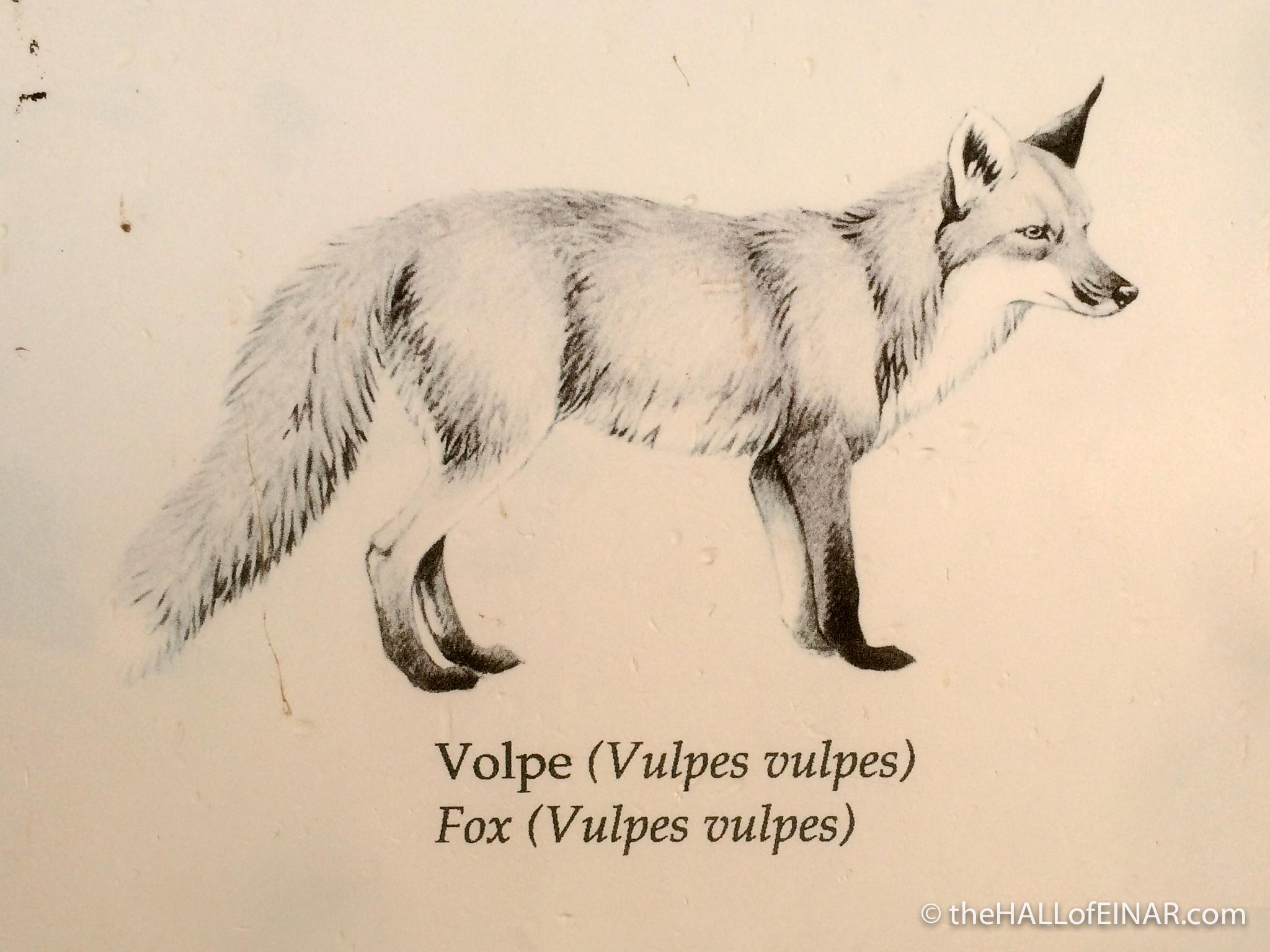 Fox - The Hall of Einar - photograph (c) David Bailey (not the)