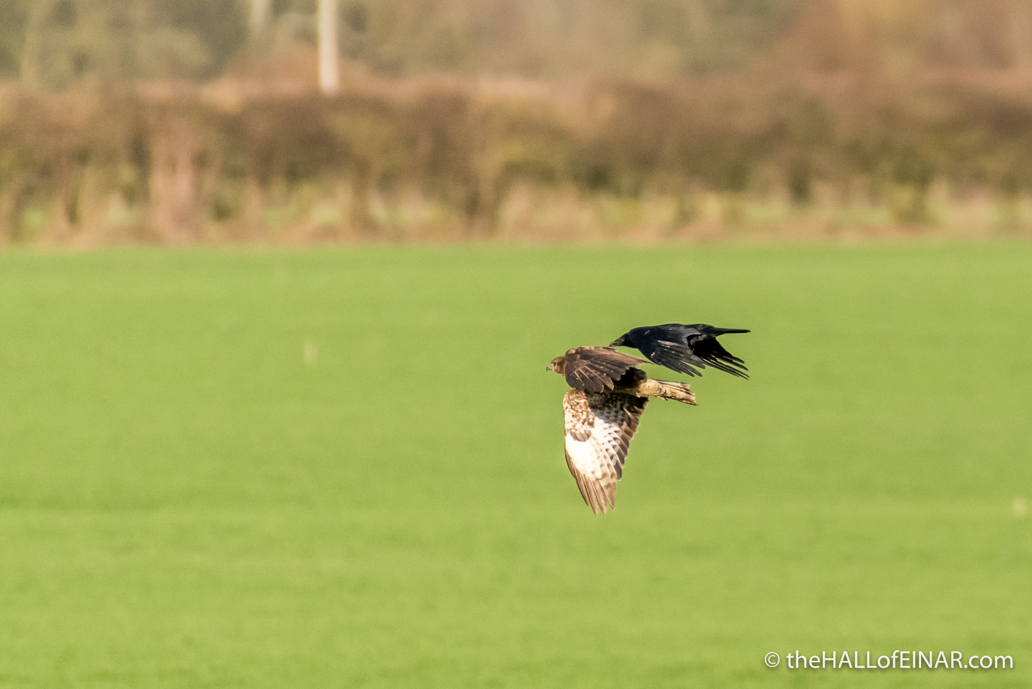 The Crow and the Buzzard - The Hall of Einar - photograph (c) David Bailey (not the)