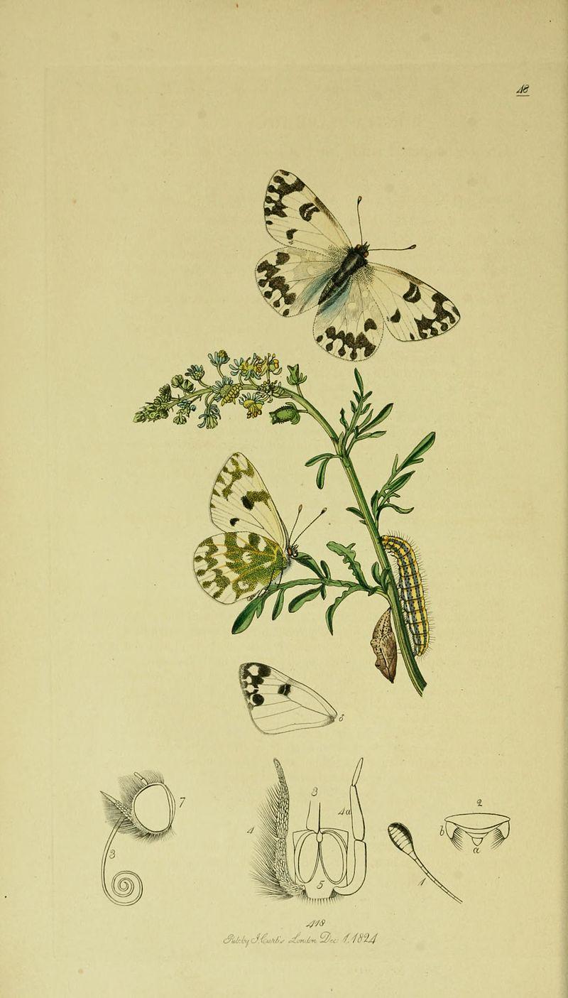 John Curtis's British Entomology