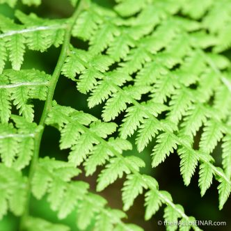 Fern - The Hall of Einar - photograph (c) David Bailey (not the)