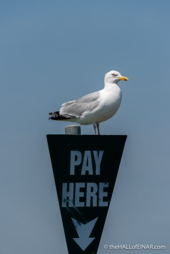 Pay Here - The Hall of Einar - photograph (c) David Bailey (not the)