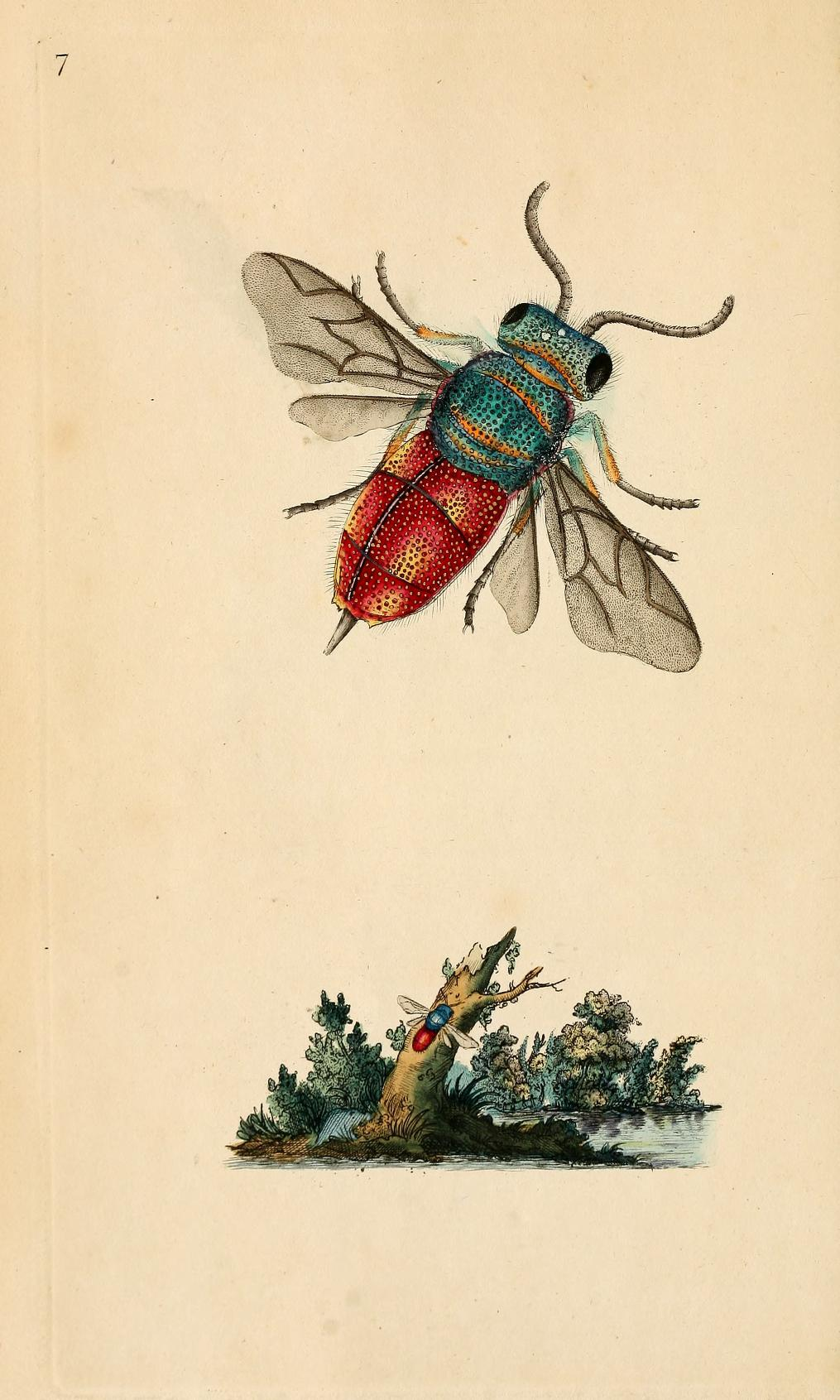 The Natural History of British Insects - E Donovan 1792