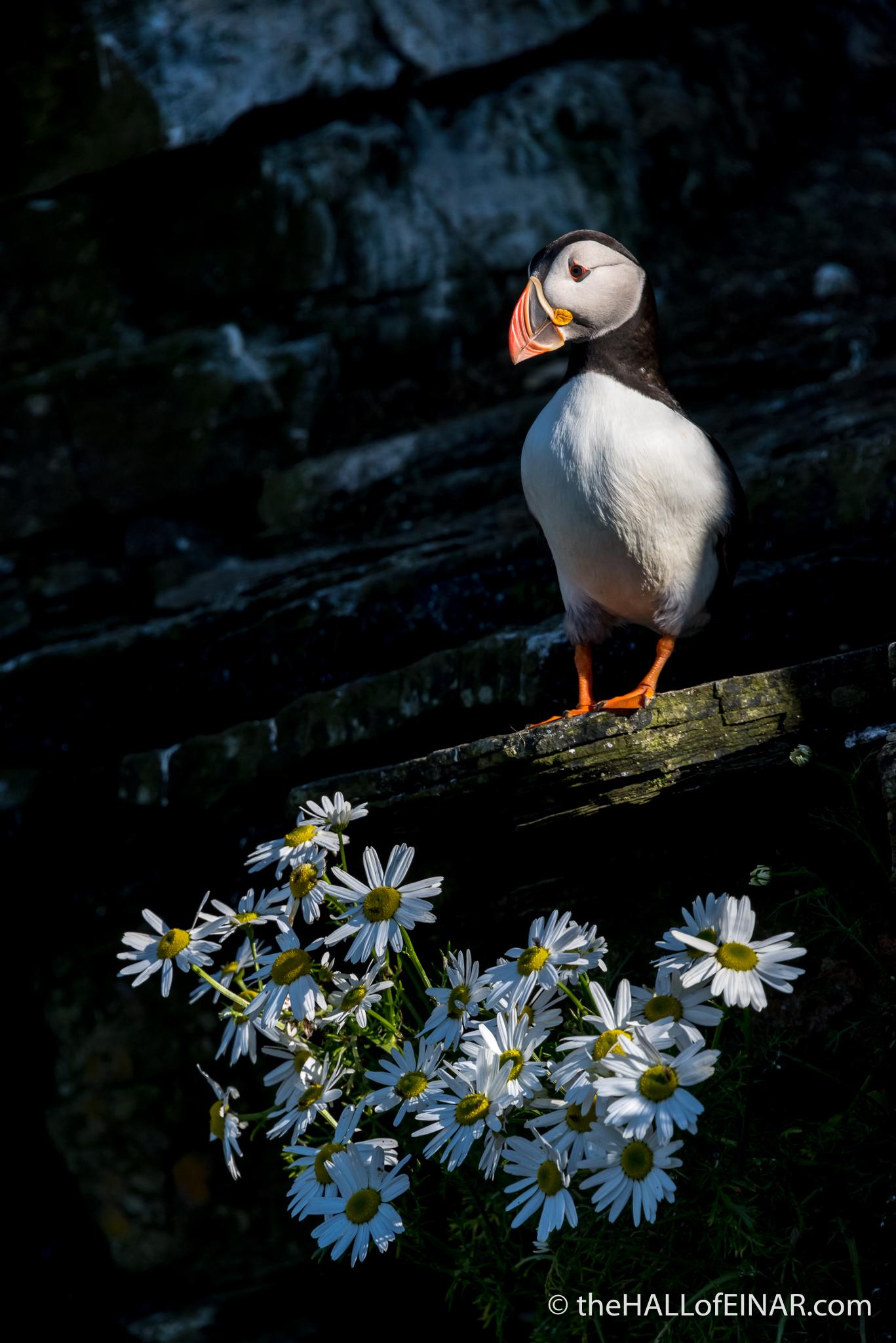 Admiring your garden - The Hall of Einar - photograph (c) David Bailey (not the)