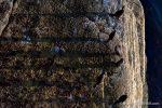 Shag Shadows - The Hall of Einar - photograph (c) David Bailey (not the)