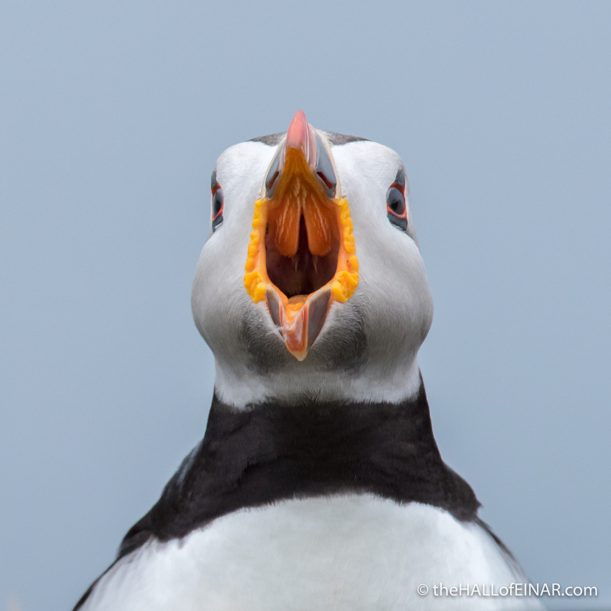The Puffin Roars - The Hall of Einar - photograph (c) David Bailey (not the)