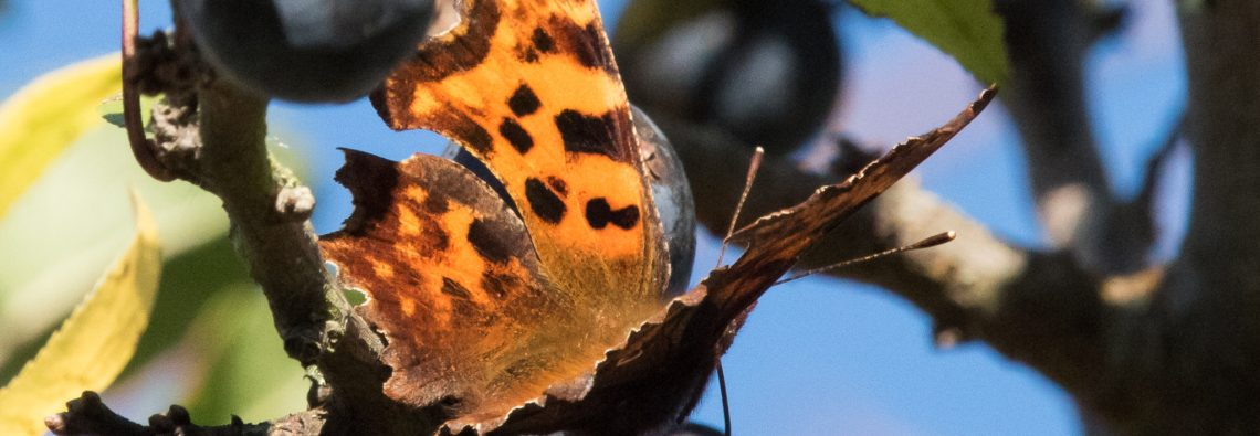Comma - The Hall of Einar - photograph (c) David Bailey (not the)