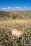 Parasol Mushrooms - The Hall of Einar - photograph (c) David Bailey (not the)