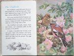 The Second Ladybird Book of British Birds - Chaffinch