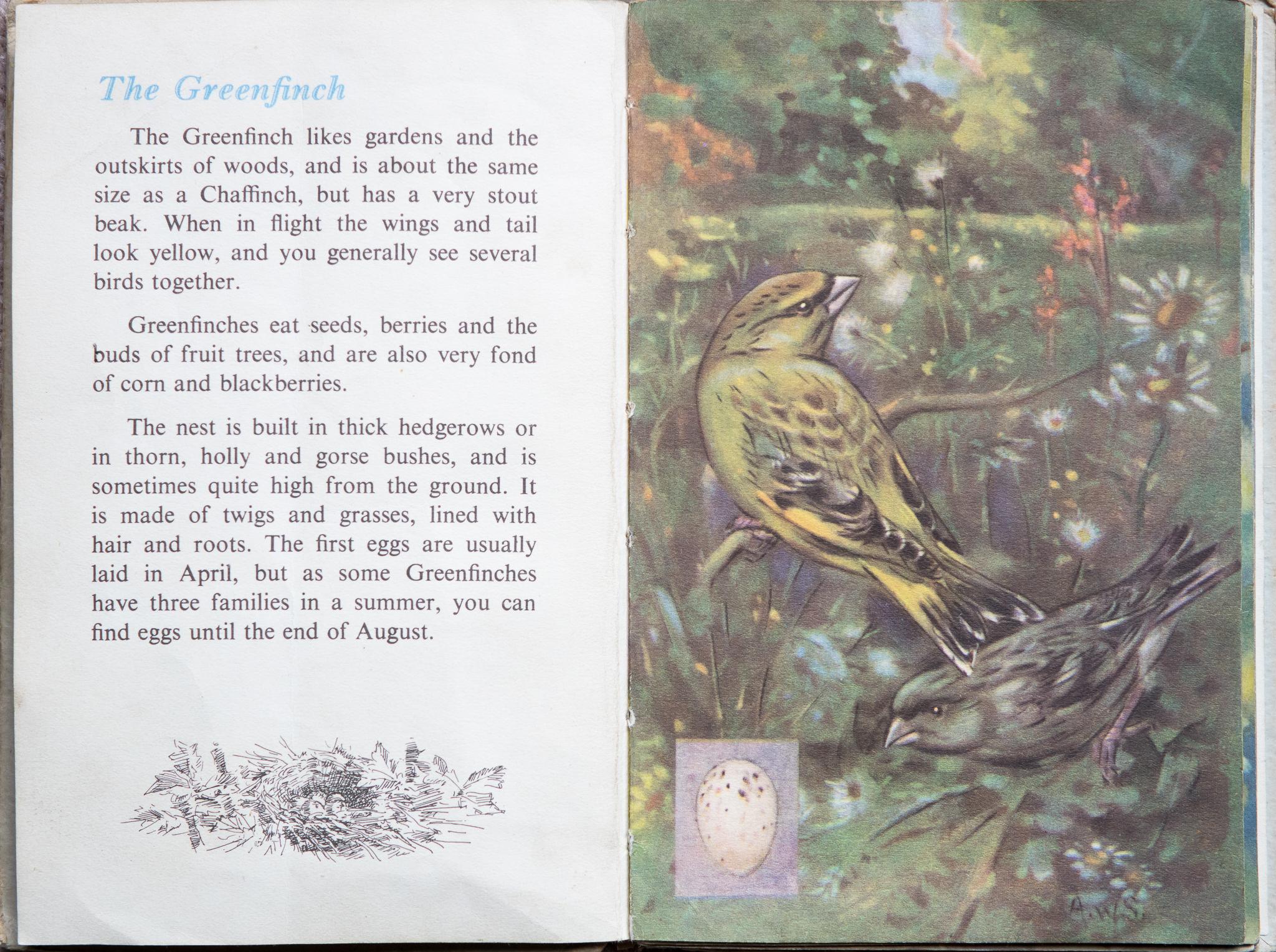 The Second Ladybird Book of British Birds - Greenfinch