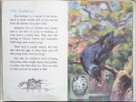 The Second Ladybird Book of British Birds - The Jackdaw