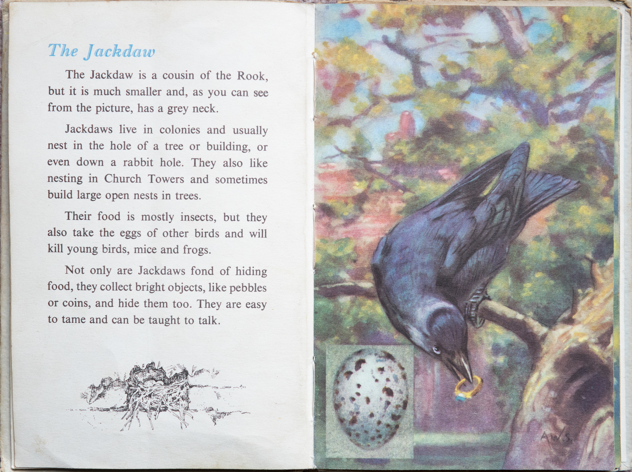 The Second Ladybird Book of British Birds - The Jackdaw