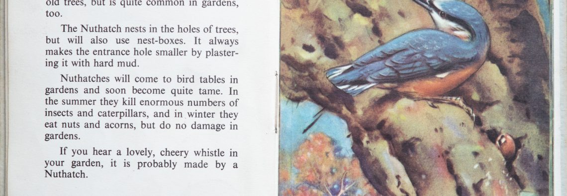 The Second Ladybird Book of British Birds - The Kingfisher