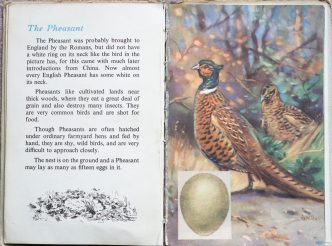 The Second Ladybird Book of British Birds - The Pheasant