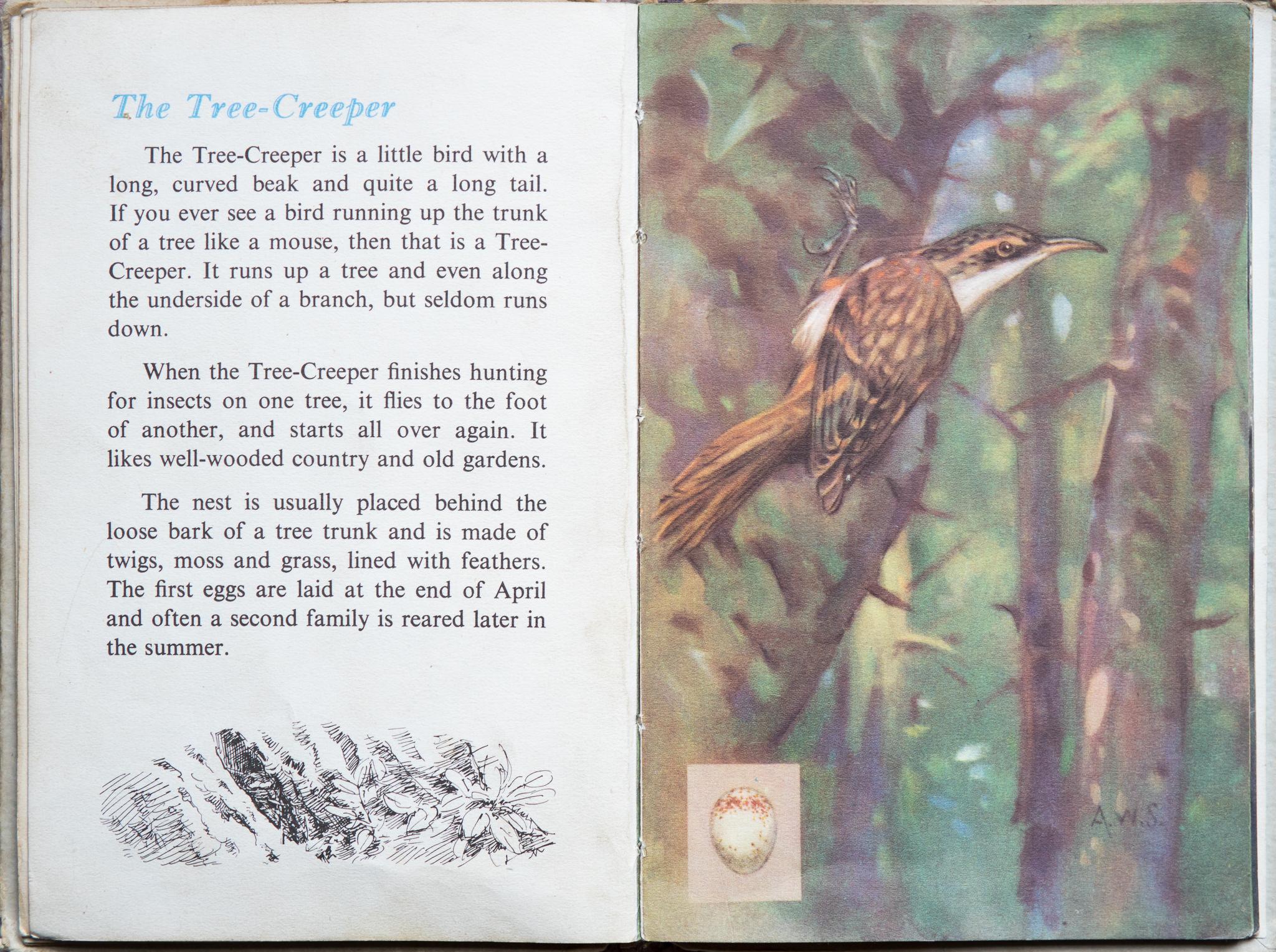 The Second Ladybird Book of British Birds - The Treecreeper