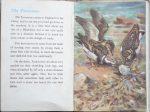 The Second Ladybird Book of British Birds - The Turnstone