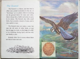 The Second Ladybird Book of British Birds - The Kestrel