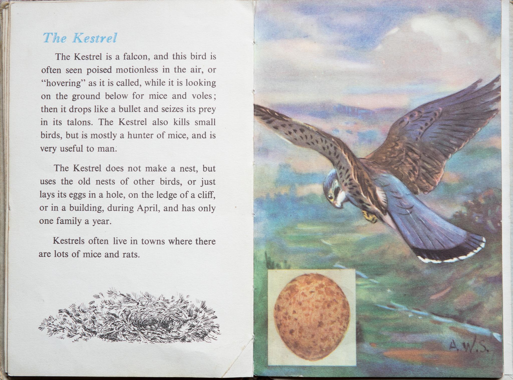 The Second Ladybird Book of British Birds - The Kestrel