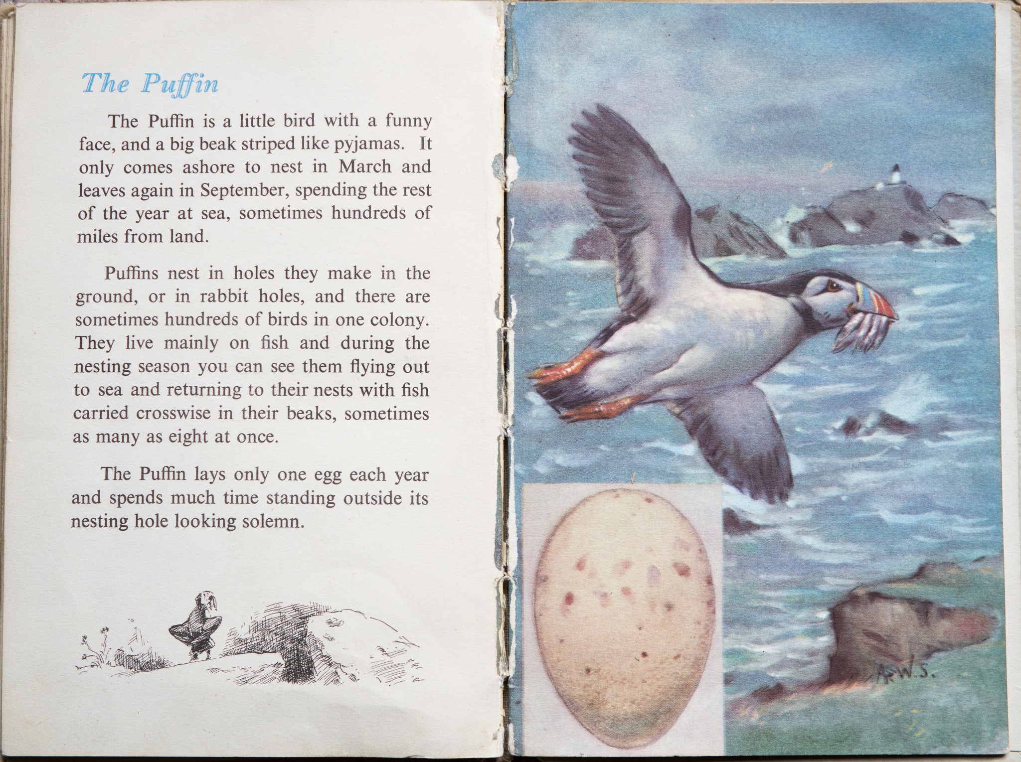 The Second Ladybird Book of British Birds - The Puffin