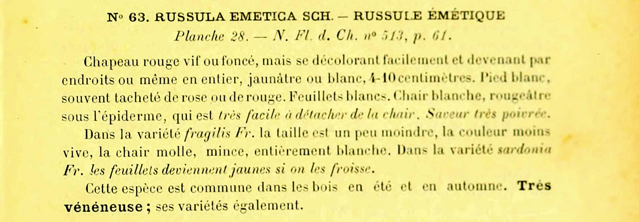 Russula emetica - The Hall of Einar
