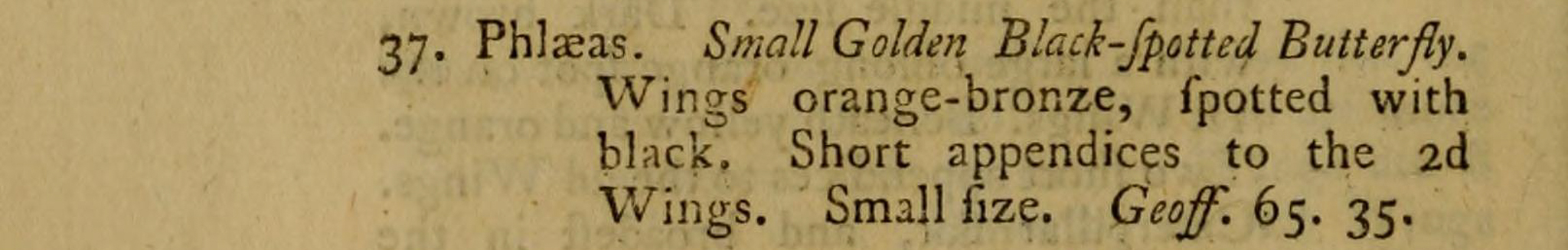 Small Copper in John Berkenhout's Outlines of the Natural History of Great Britain - The Hall of Einar