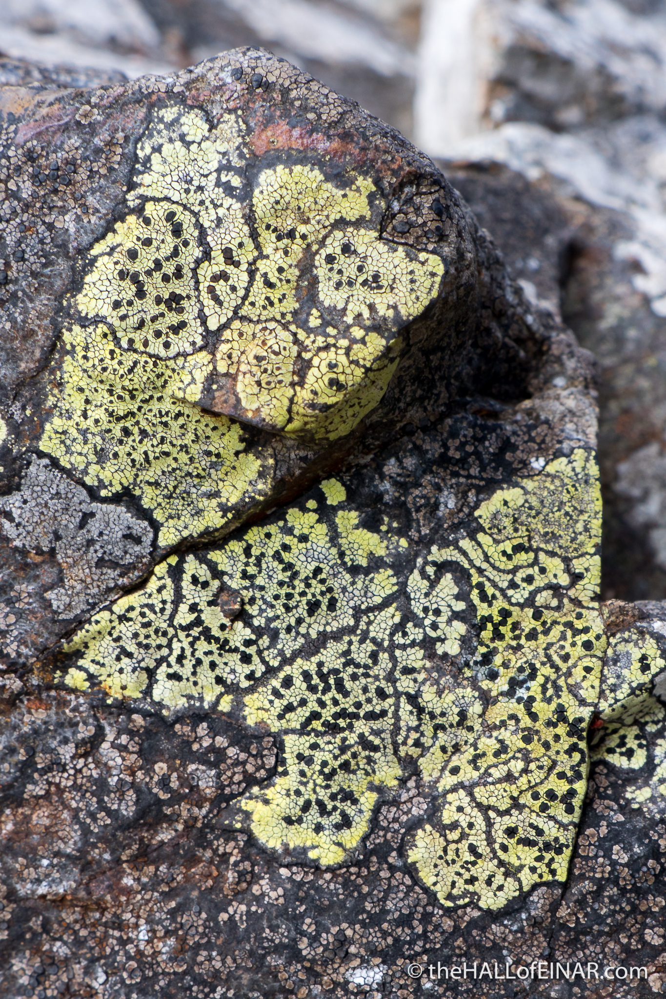 Castle Drogo Lichen - The Hall of Einar - photograph (c) David Bailey (not the)