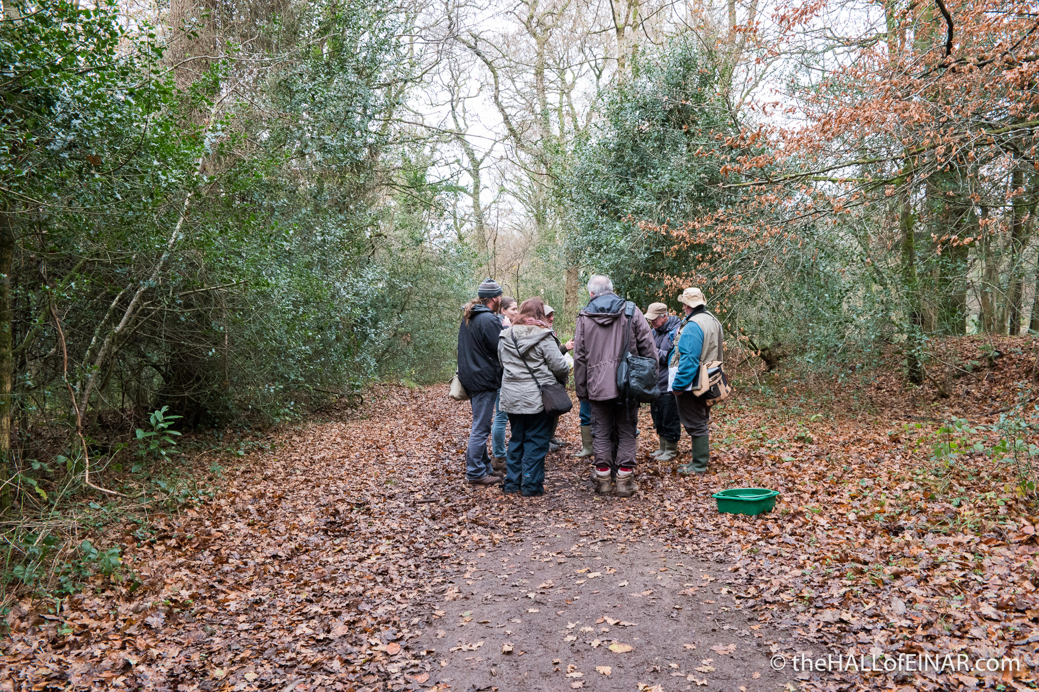 Devon Fungus Group - The Hall of Einar - photograph (c) David Bailey (not the)