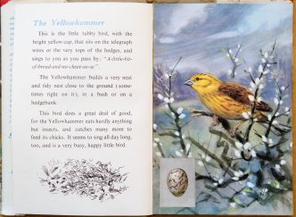 Ladybird Book of British Birds - Yellowhammer - The Hall of Einar